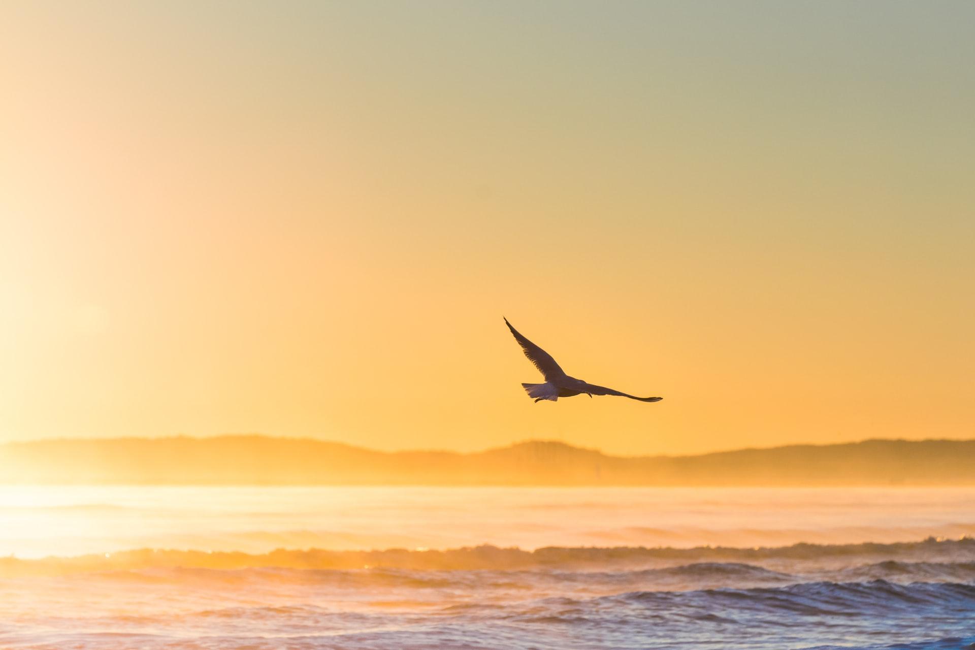 sta znaci sanjati da letis