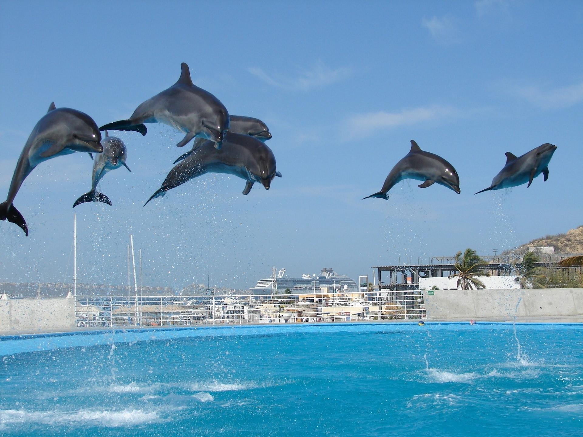 sta znaci sanjati delfina